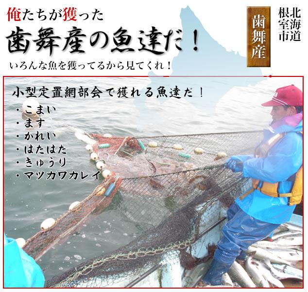 たくさんの魚の種類を獲る小型定置網漁業・小型定置網網揚げこまい・ます・かれい・はたはた・きゅうりマツカワカレイ
